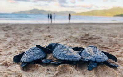 Jak wygląda spotkanie z żółwiami w naturalnym środowisku? Ciekawostki o żółwiach
