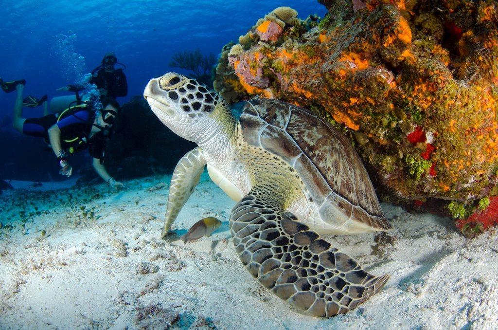 zolwie-w-naturalnym-srodowisku-nurkowanie-z-caretta-caretta-odwaz-sie-wiedziec-fair-travel-event