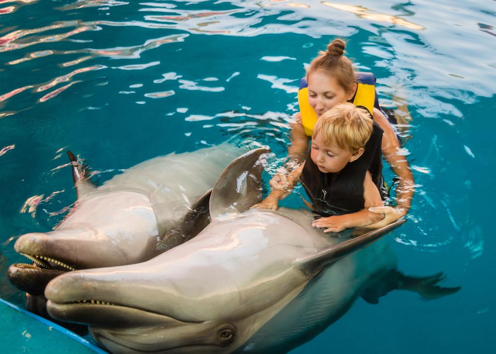 atrakcje-turystyczne-ze-zwierzetami-delfin-z-matka-i-dzieckiem-w-basenie-odwaz-sie-wiedziec-fair-travel-event