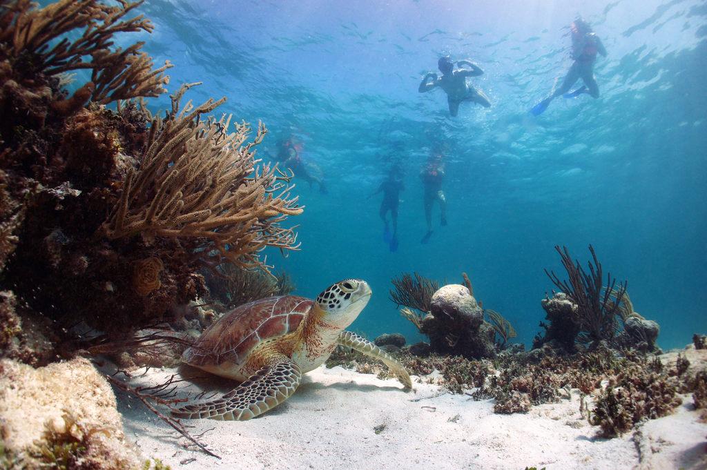 atrakcje-turystyczne-ze-zwierzetami-plywanie-z-zolwiami-akumal-meksyk-odwaz-sie-wiedziec-fair-travel-event