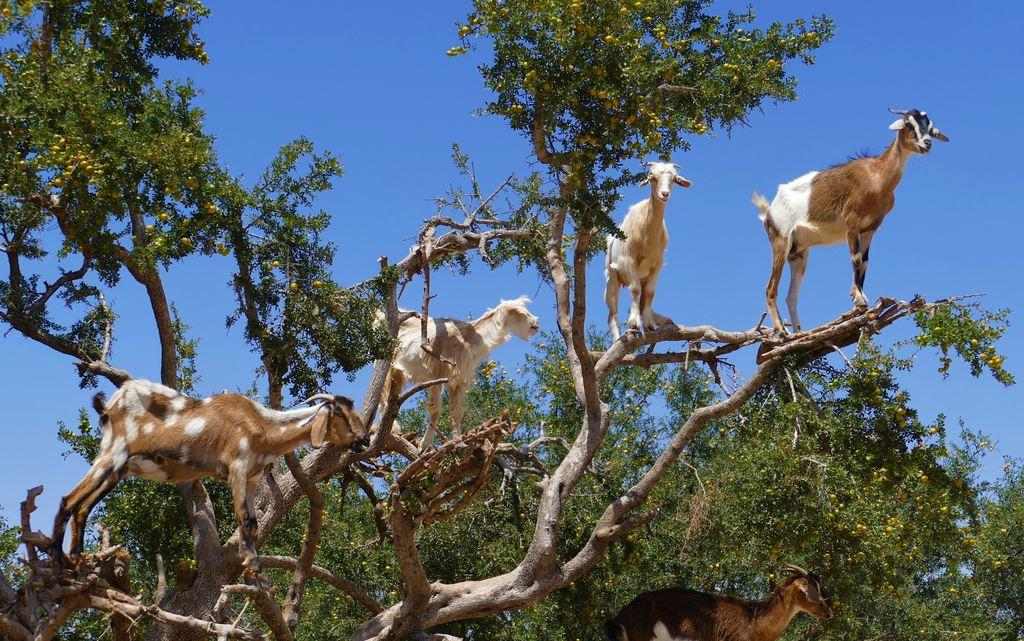 kozy-na-drzewach-w-maroko-dwaz-sie-wiedziec-fair-travel-event