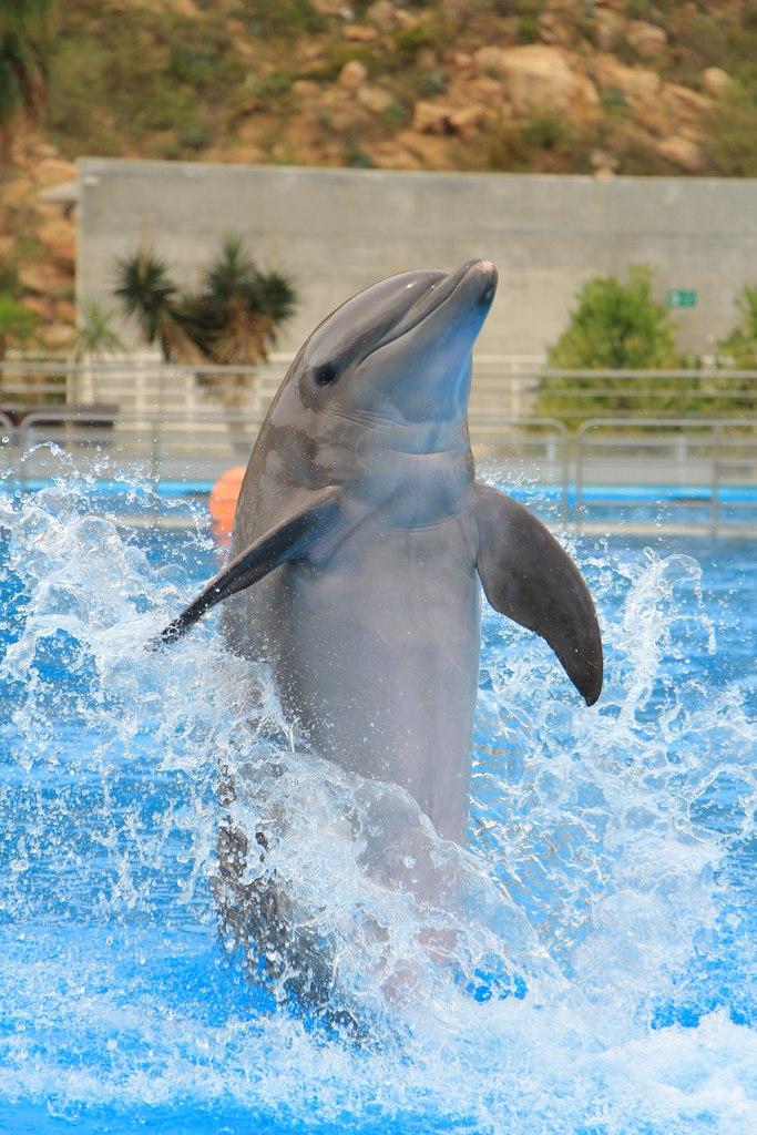 kulisy-delfinarium-delfin-w-basenie-odwaz-sie-wiedziec-fair-travel-event